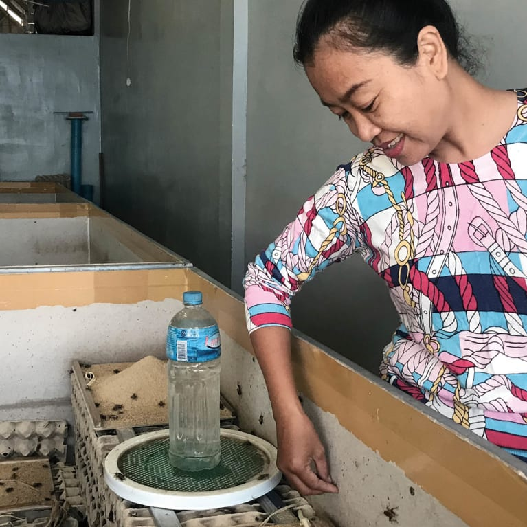 Chan Tola meets all the needs of her crickets including food, water and egg boxes for shelter.