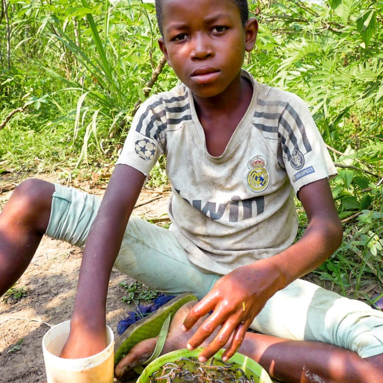 onathan cleans his harvest of caterpillars on the banks of the Lasa River.