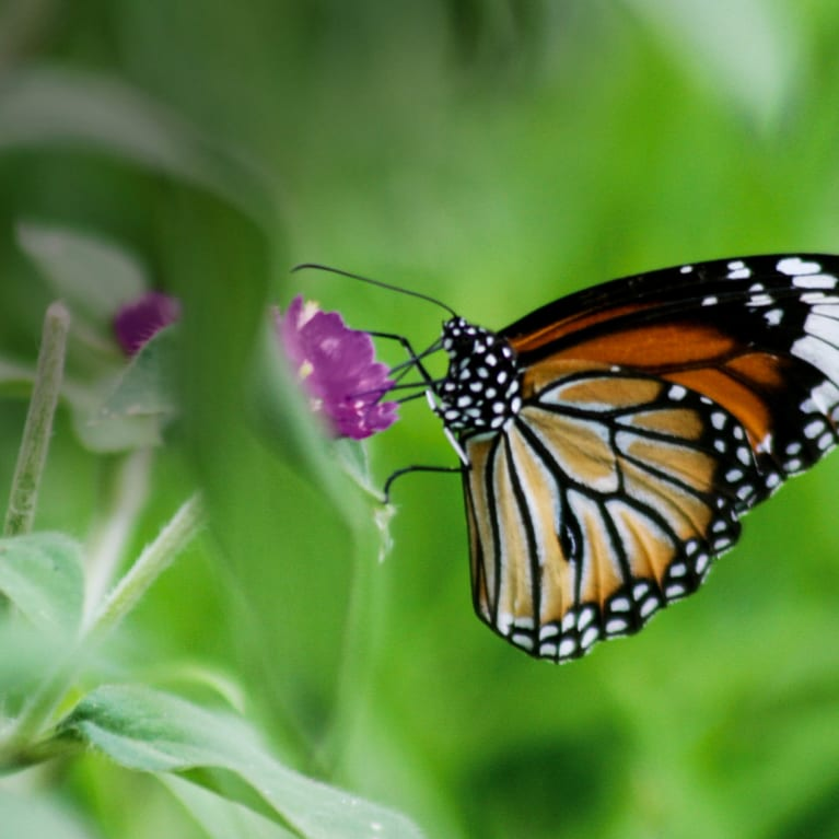 A photo of a butterfly on a flower. Insects play an important role in pollination.