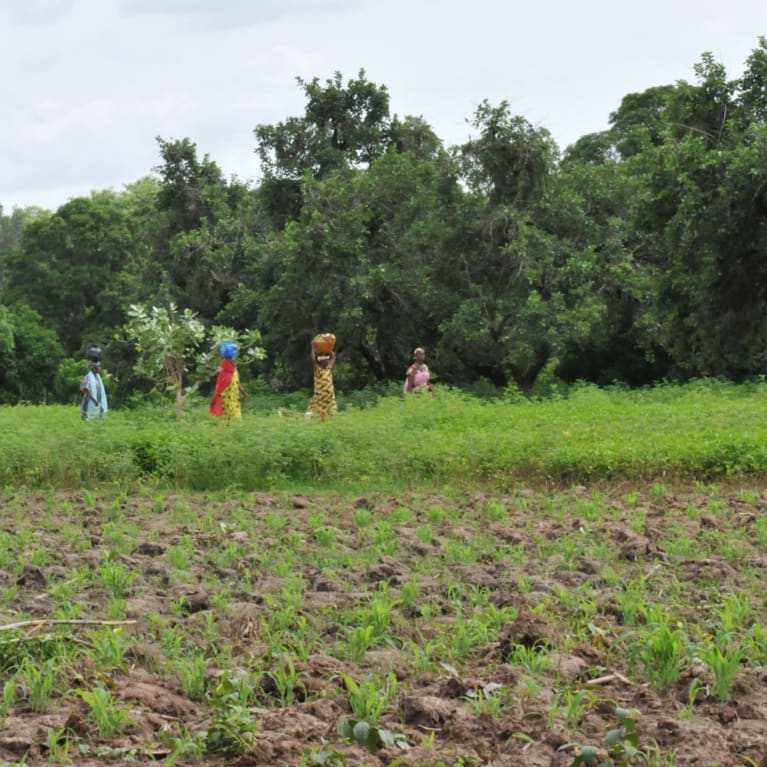 A community in Mali hopes for crop success as they enter the rainy season. The previous year, crops had failed due to lack of rainfall.