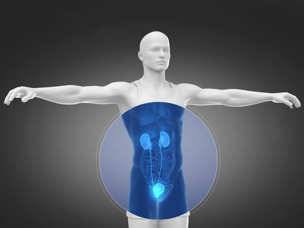 Kidney System