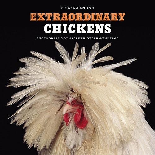 Extrordinary Chickens