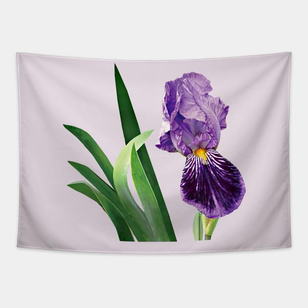 Irises Striped Purple Iris Iris Tapestry Teepublic
