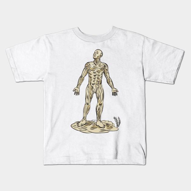 Human Muscle Anatomy Etching - Human Muscle Anatomy Etching - Kids T ...