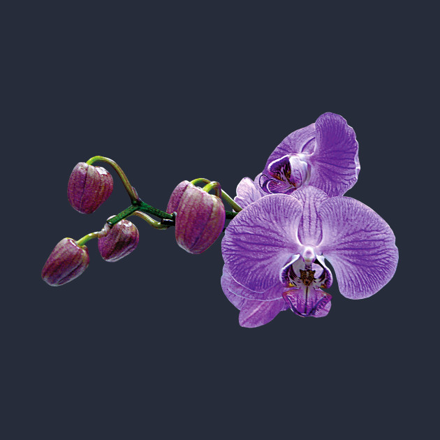 Purple Orchids With Buds