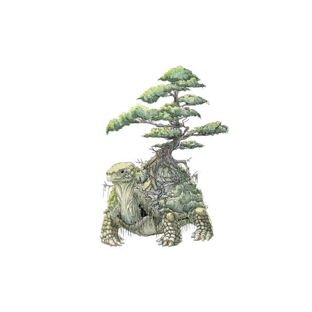 Turtle Bonsaii