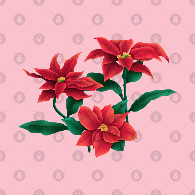 Poinsettia(Christmas flower)