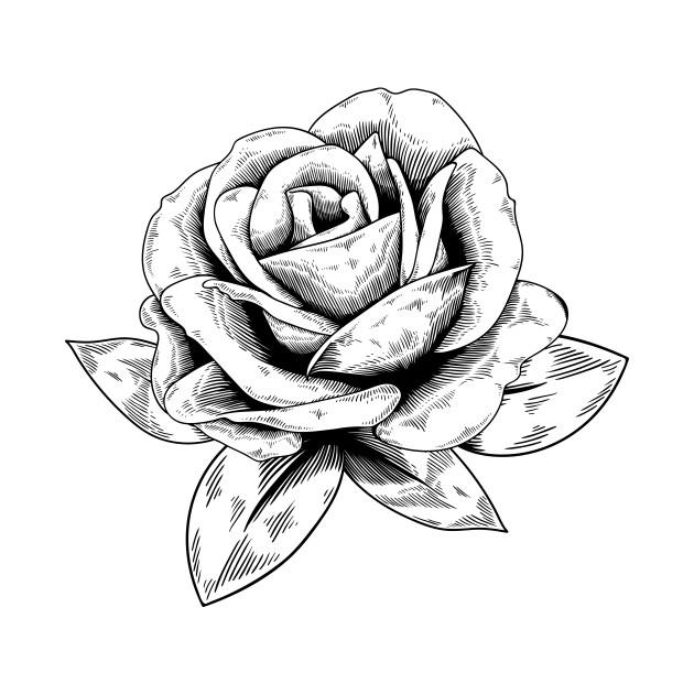 Rose Drawing - Rose - Phone Case | TeePublic