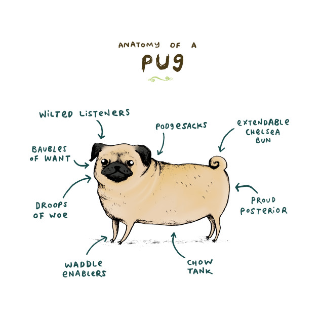 Anatomy of a Pug