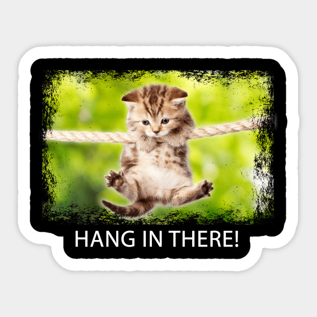 Hang in There Cat Shirt Funny Cat Lovers Halloween Gift Idea ...