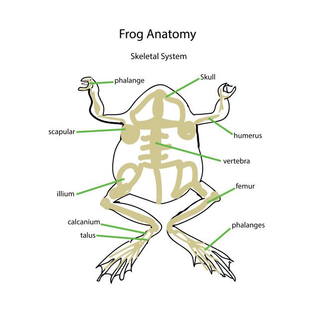 Frog Anatomy-Skeletal System - Skeletal - Onesie | TeePublic