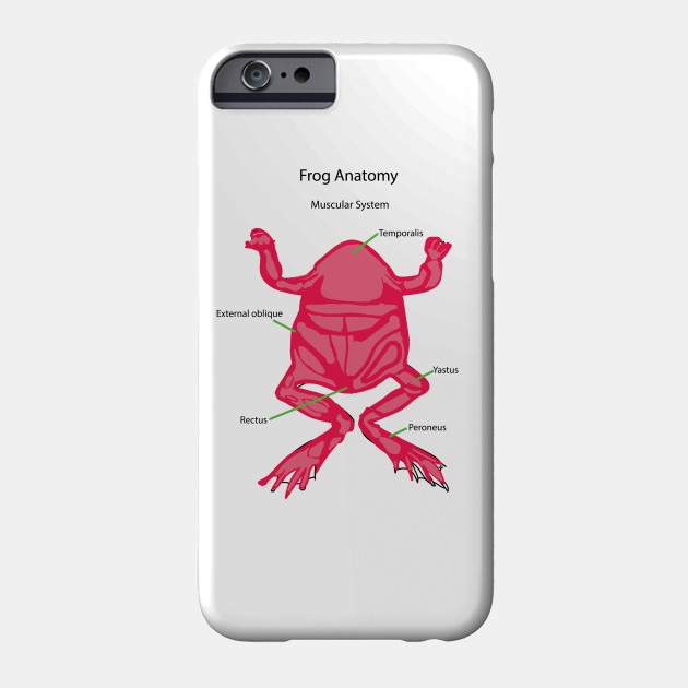 Frog Anatomy Muscular System Muscles Phone Case Teepublic