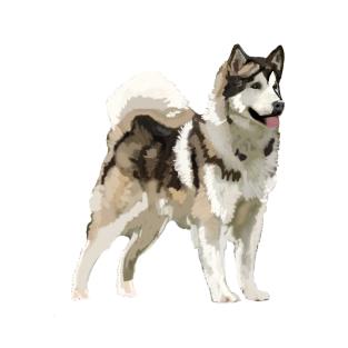 ca471856 Husky Dog T-Shirts   TeePublic