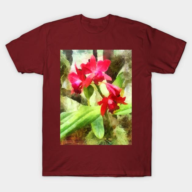 Maroon Cattleya Orchids