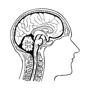 brain t shirts teepublic Animal Brain Sizes brain t shirt