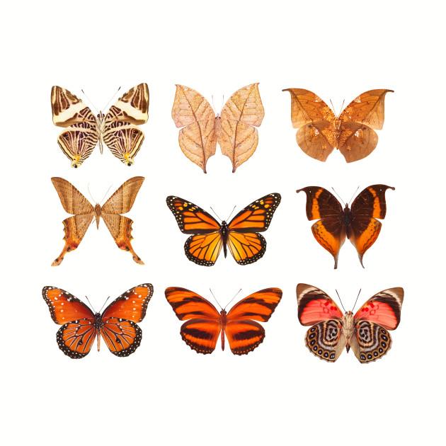 Butterflies Pattern 3: Retro