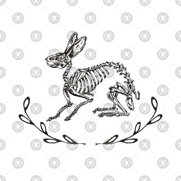Bunny Skeleton