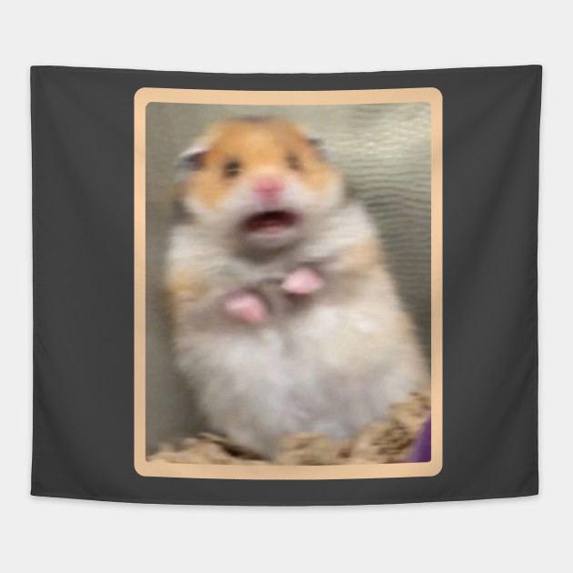 my hamster is scared of me