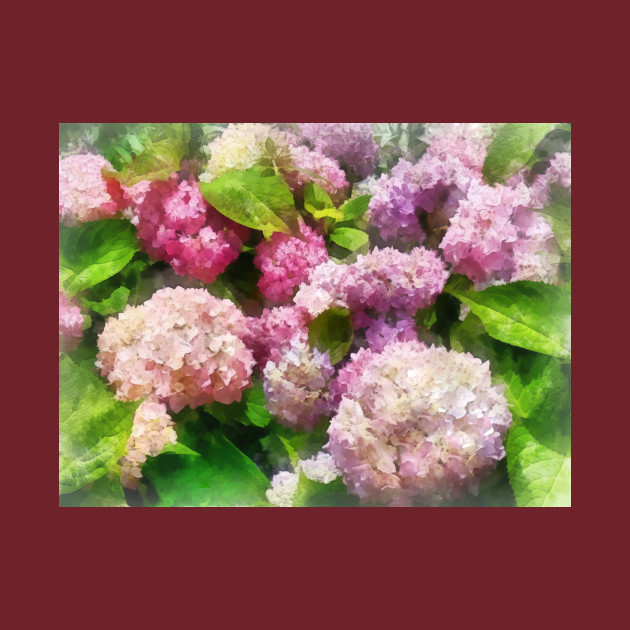 Pink and Lavender Hydrangea