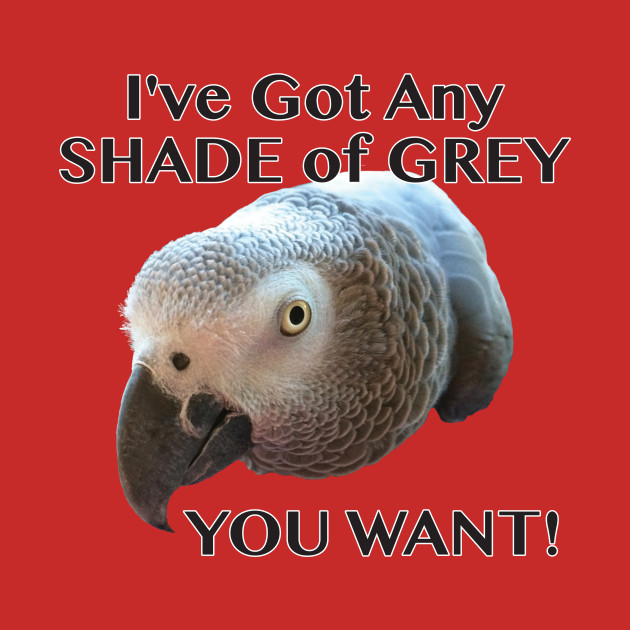Any Shade of Grey - African Grey Parrot