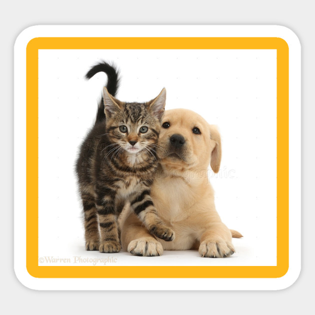 Puppies Kitties Cute Baby Animals Sticker Teepublic