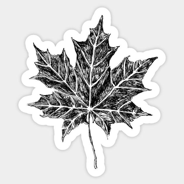 Maple Leaf Sketch