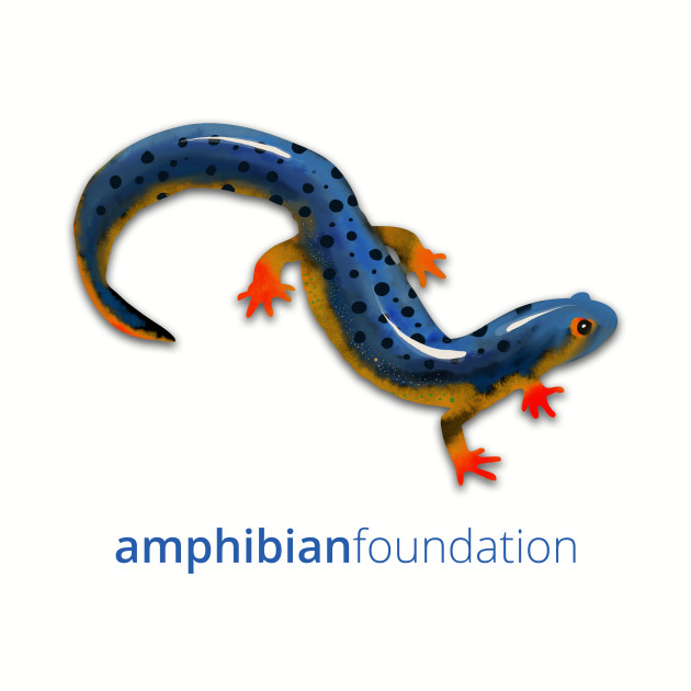 Abstract Watercolor Salamander