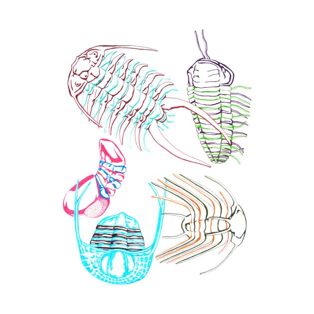 Ordovician Era Trilobites