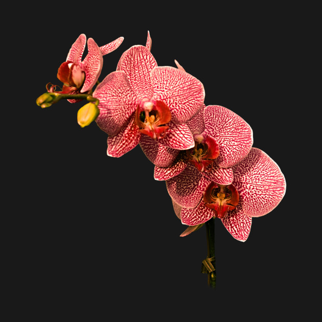 Orchid Flower Lover Beautiful Painting Pink Art Calm