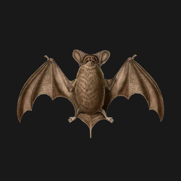 Austin Bat