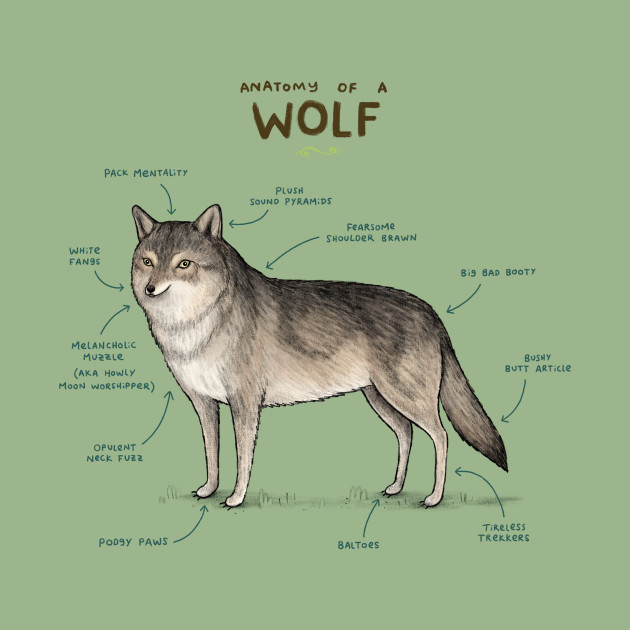 Anatomy Of A Wolf Wolf Tank Top Teepublic