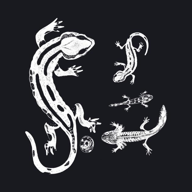 Salamander - white version