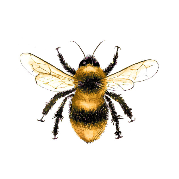 Bumblebee Insect Size