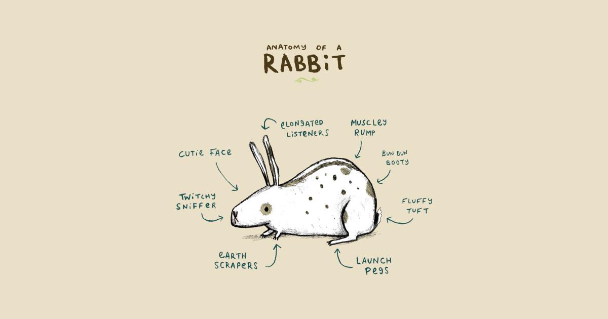 Anatomy of a Rabbit - Hop - T-Shirt   TeePublic
