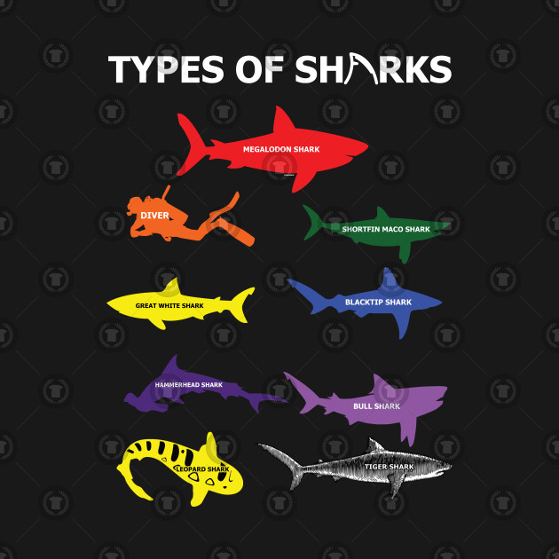 Type Of Sharks Aquamarine Marine Life Water Sea Ocean Shark Family Sea  Creatures by psykograf
