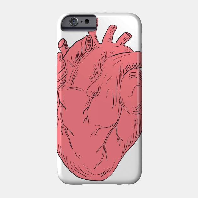 Human Heart Anatomy Drawing - Human Heart Anatomy Drawing - Phone ...