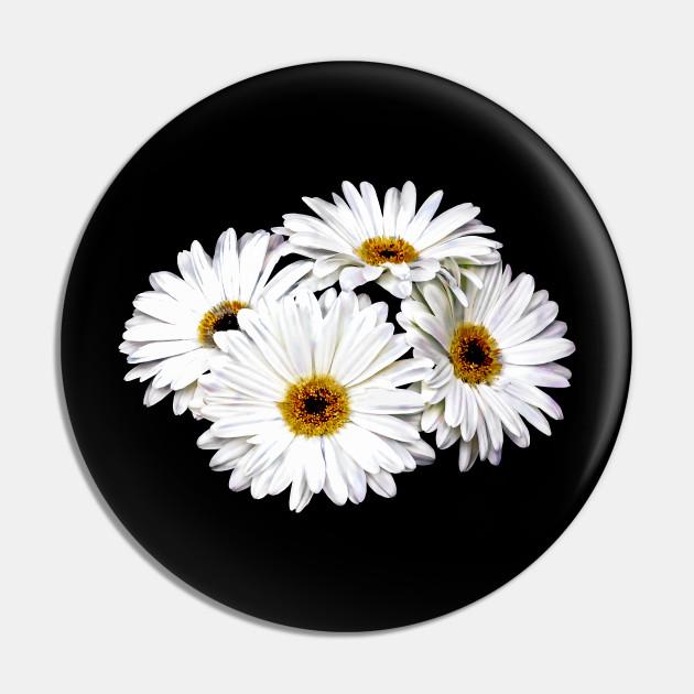 Daisies - Four White Daisies