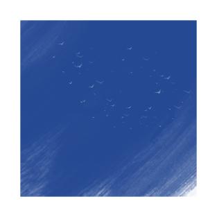 blue birds t-shirts