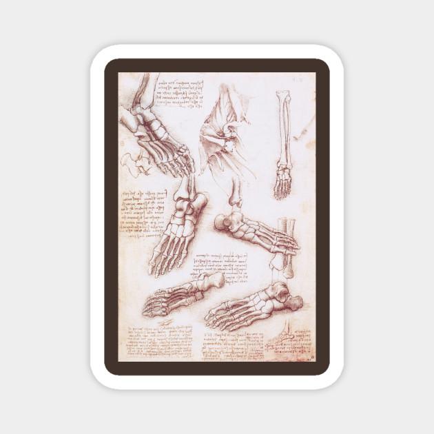 Human Anatomy Skeleton Foot Bones By Leonardo Da Vinci Feet Magnet Teepublic Au