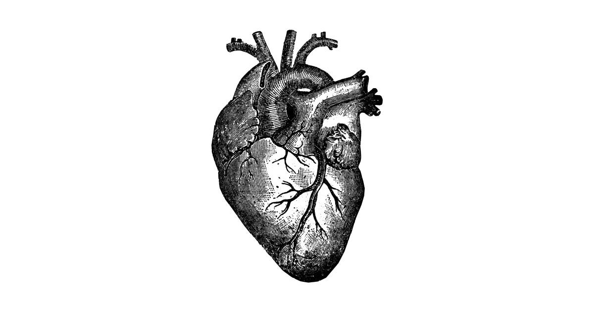 Anatomical Heart T Shirts Teepublic