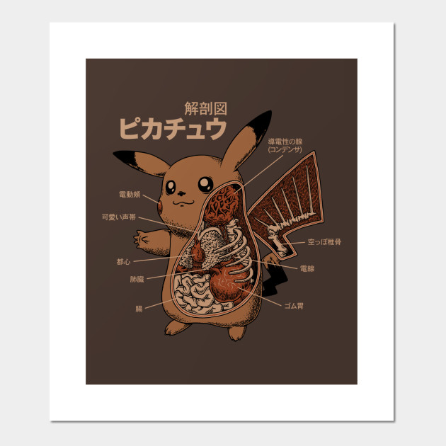 Pikachu Anatomy Pokemon Posters And Art Prints Teepublic