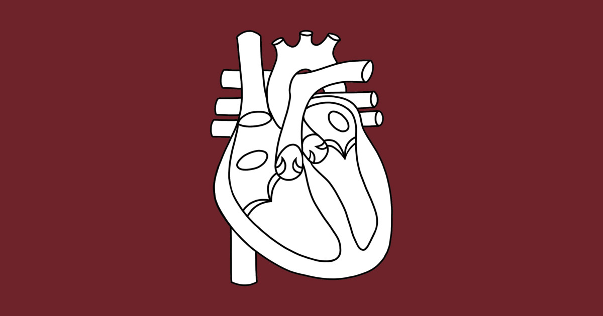 Diagram of the Heart (blank) - Anatomy - Sticker | TeePublic