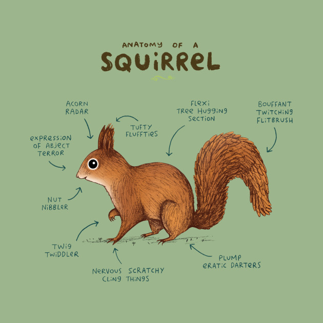 Anatomy of a Squirrel - Anatomy - Tank Top | TeePublic