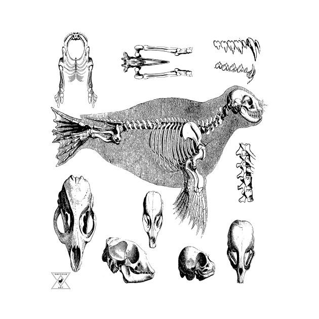 Sea Lion Seal | Ocean Animal Mammal Marine Life