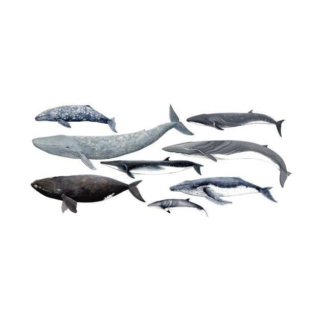 Whale diversity