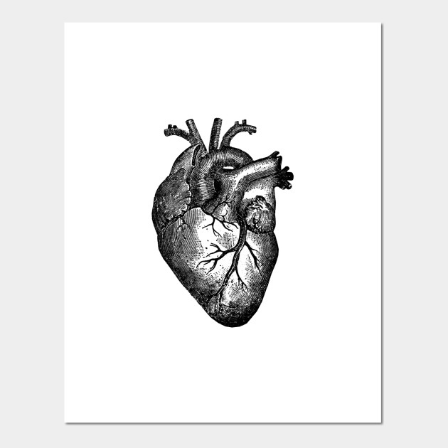 Vintage Heart Anatomy Anatomical Heart Posters And Art Prints