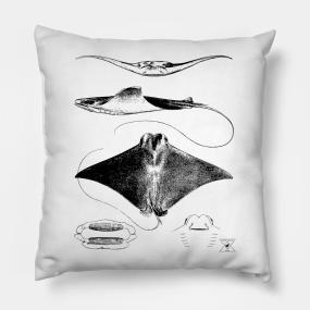 Stingray Pillows   TeePublic