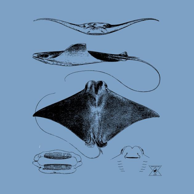 Stingray Anatomy Sharks Ocean Sea Animal Science Stingray