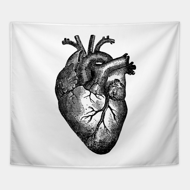 Vintage Heart Anatomy Anatomical Heart Tapestry Teepublic