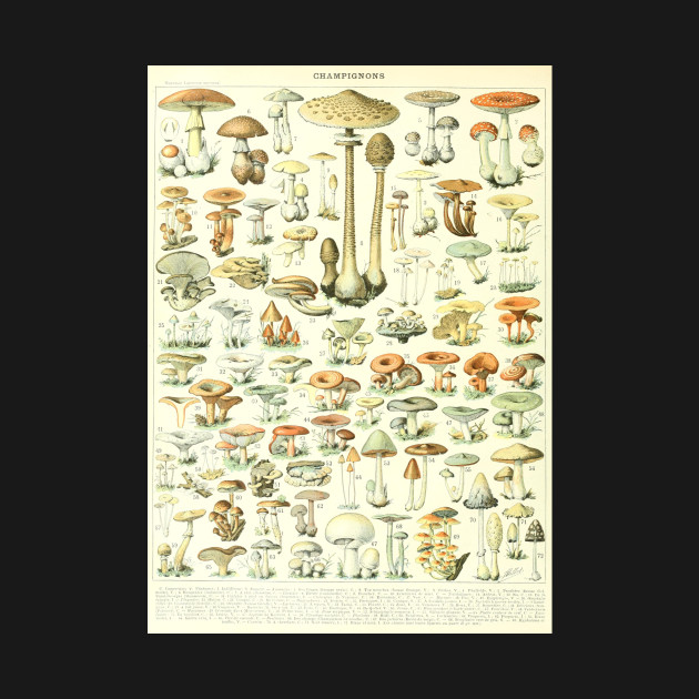 Mushrooms Scientific Illustration Drawing Magic Psychedelic